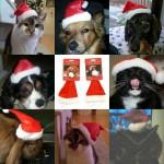 kerstmuts_huisdier_compilatie_hond_kat_konijn_uil